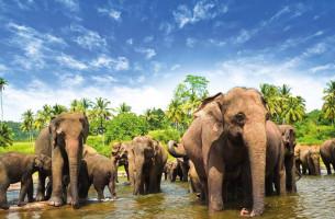 Шри Ланка: прямой рейс из Алматы!